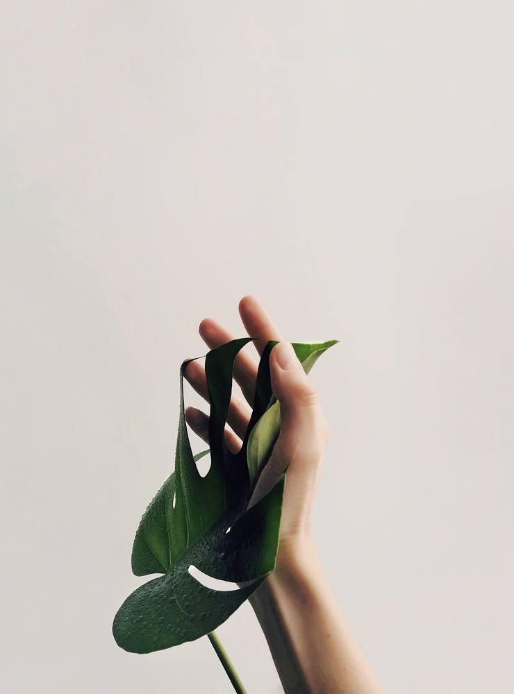 Mit den neuen Pflanzenhaltern eine grüne Wohnwelt schaffen